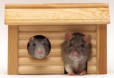 Как сделать домик для крысы 377