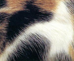Gastro Intestinal Low Fat - ROYAL CANIN